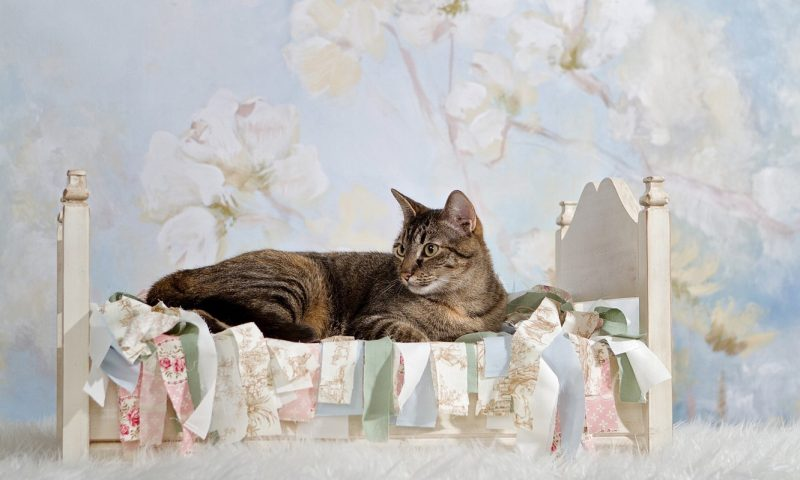 Терапевтическая сказка «Котенок, который спал в своей кроватке».